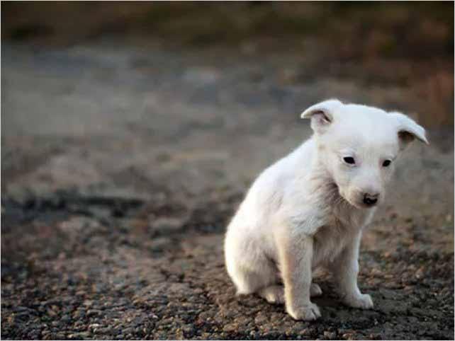 Necesario denunciar maltrato a mascotas