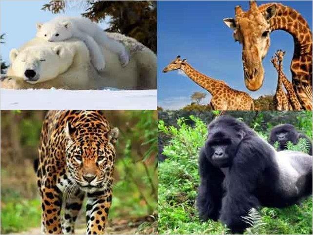 Un millón de especies están en peligro de extinción por culpa del hombre