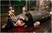 La Corte de la Haya prohibi� la caza de ballenas
