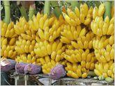 El sector bananero de Ecuador aspira a romper el r�cord de exportaciones