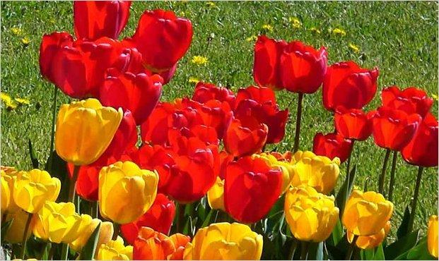 Ecuador es el tercer exportador mundial de flores for Plantas ornamentales del peru
