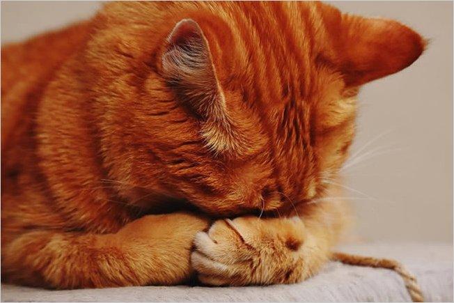 Los gatos también saben amar