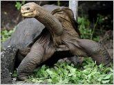 Cuerpo embalsamado de tortuga