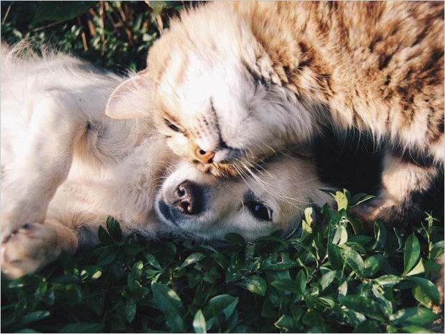 Mascotas: Cómo actuar en desastres naturales