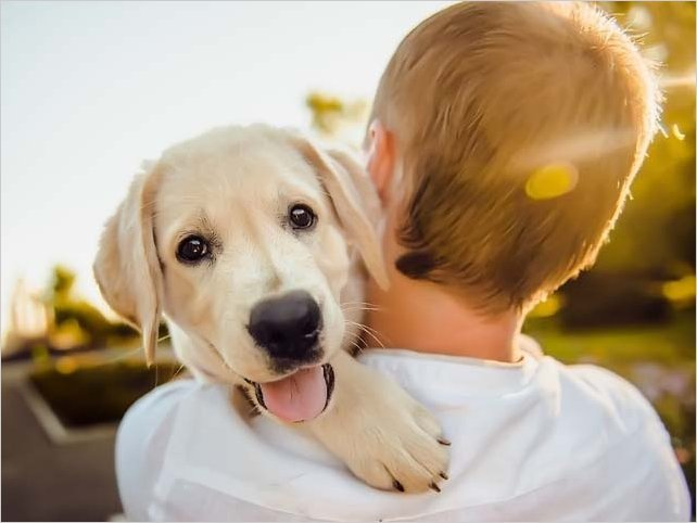 Conoce tus responsabilidades como dueño de una mascota
