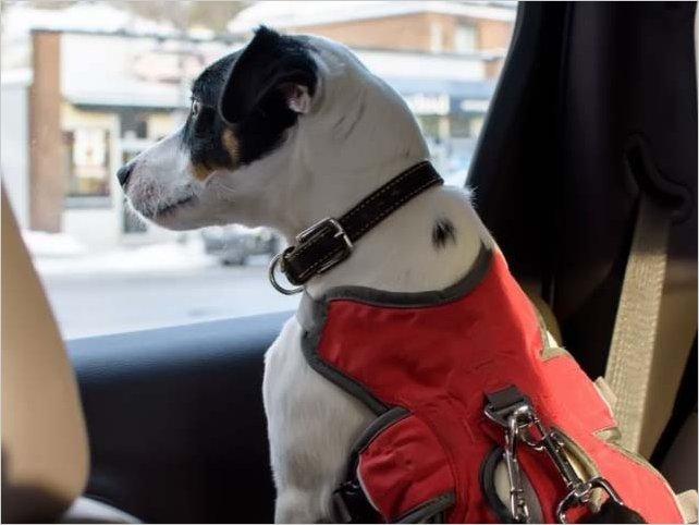 Viajar con mascotas en coche: cómo hacerlo de forma segura con tu perro