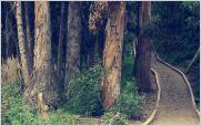Minga ciudadana renov� el paseo ecol�gico de Ambato