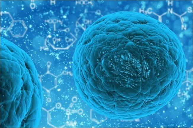Científicos chinos regeneran un pulmón con células madre