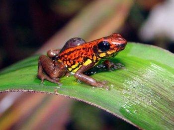 Hallan nuevas especies de animales en Ecuador