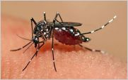 Ecuador en alerta por posible llegada del virus chikungunya